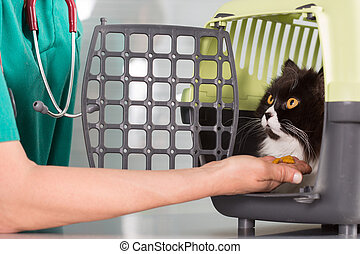 Veterinary clinic taking a Persian cat of your transporter