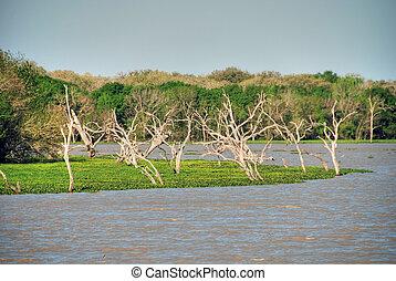 Lake near Galveston, Texas
