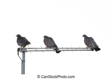 Doves Silhouette in a Roof - Overexposed distant view photo...