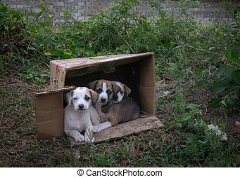 Abandoned puppies in a cardboard box - Abandoned puppies i...