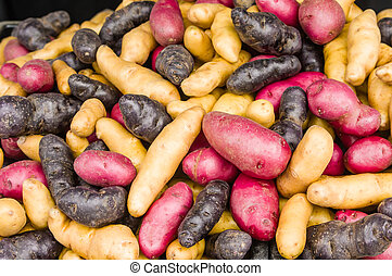 Colorful fingerling potatoes at the market - Display of...