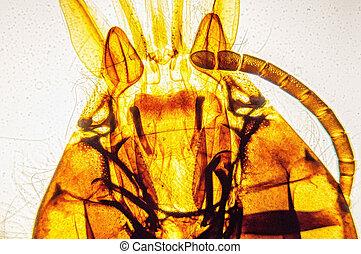 bee sucking nectar tube