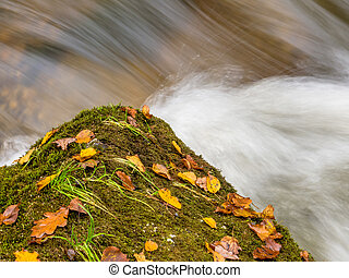 bach with stone - a rock with autumn leaves in a stream