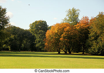 lawn trees and sunlight during fall autum