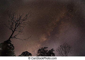 Astrophotography star trails with dry tree over forest