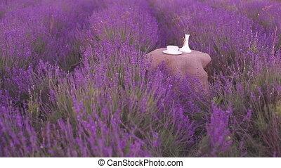 Harvested lavender flowers. - Harvested lavender flowers on...