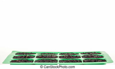Timelapse of growing plants over white backround - Timelapse...