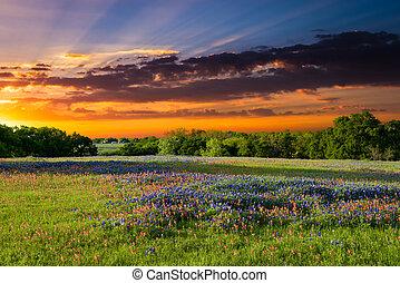 Sunset on Sugar Ridge Road, Ennis, TX - Texas pasture filled...