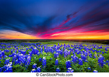 Sunset on Sugar Ridge Road, Ennis, TX - Texas pasture filled...