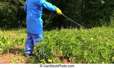 man using pest sprayer - farmer protect potato plant in...