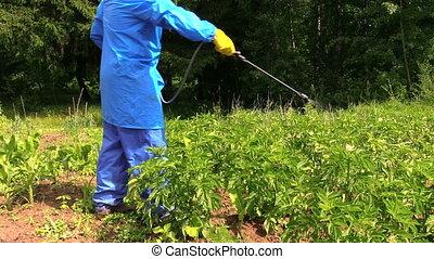 man using pest sprayer - farmer protect potato plant in...