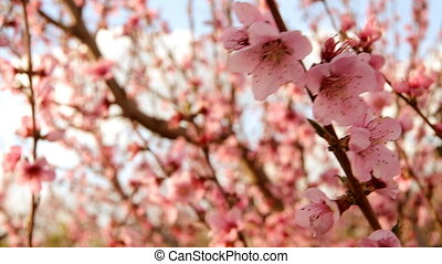 Blooming trees - Blooming trees in spring on a sunny day