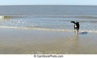 Dog retrieving a Toy out of the Water