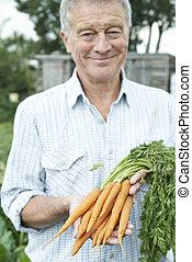 Senior Man On Allotment Holding Freshly Picked Carrots