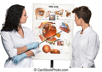 two optician or oculist women telling about structure of the...