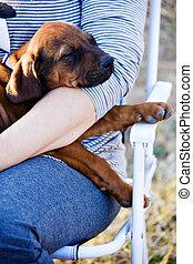 Loving owner - Rhodesian ridgeback puppy sleeping in the lap...
