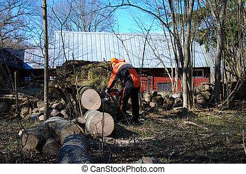 Lumberjack at a wind fallen tree - Lumberjack cuts a wind...