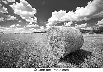 Hay bails on the field under blue sky