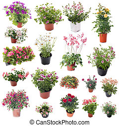 group of flower plants in front of white background