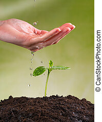 Woman hand watering young plant in pile of soil