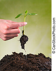 planta, mulher, solo, jovem, mão, pilha, semeando