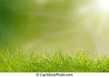 Abstract green background - Young grass with blurred green...