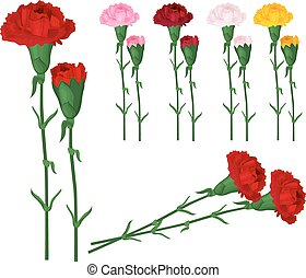 Red carnations isolated on white. Different colors.