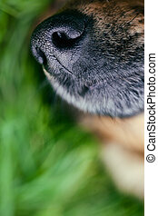 Dog snout