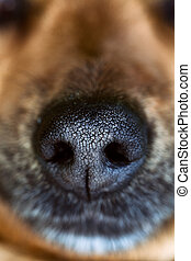Dog snout. Dog close up. Animal nose.