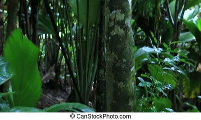 Jackfruit in Vallee de Mai Nature Reserve in Praslin....