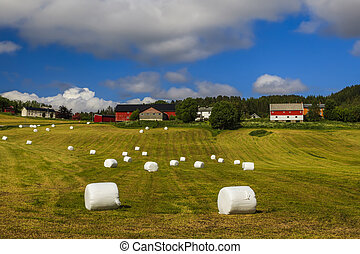 Haying in the field Picturesque rural landscape Norway