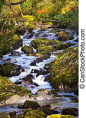 Stream in Autumn - Autumn stream in Glengarriff Woods, West...