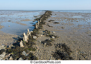 Mudflat in Dutch sea - Shallow mudflat in Dutch wadden sea...