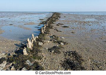 Mudflat in Dutch sea - Shallow mudflat in Dutch wadden sea...