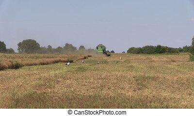 combine harvest field