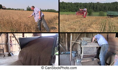 farmer harvester collage - Farmer check harvest and sift...