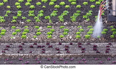 Tractor slowly irrigating seedlings - Tractor slowly...
