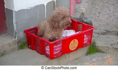 Small dog in the box - Small dog in the red box