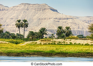Palms and dwelling houses on the banks of the Nile in Egypt