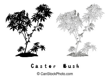 Castor Plant Contours, Silhouette and Inscriptions - Castor...