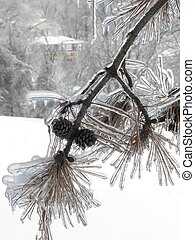 Icy Pine Comb & Tree Branch