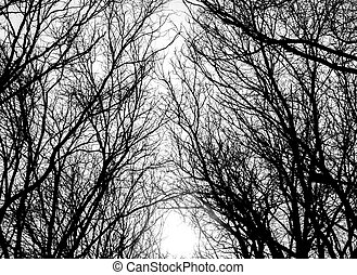 Tree branches - Closeup image of tree branches