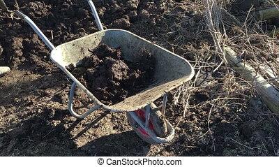 throws compost into a wheelbarrow - Man throws compost into...