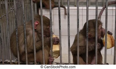 Monkeys in Scientific Apery 7 - Monkeys in Scientific Apery
