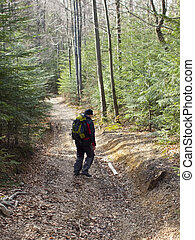 A man walks through the woods. - A man with a backpack...