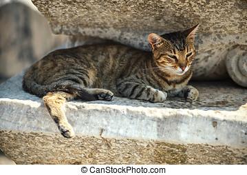 Turkey, Ephesus, a cat (Felis catus) in ruins of the ancient...