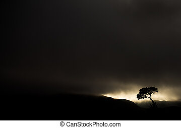 Twilight - Dawn breaking over a lone tree