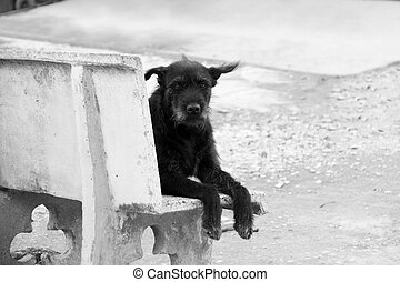 Lonely Black Dog (Look straight) - Lonely black dog with sad...