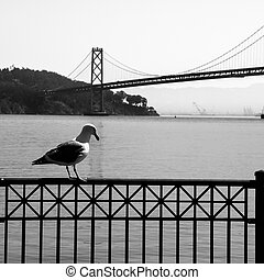 Seagull and Oakland Bay Bridge in background, San Francisco,...