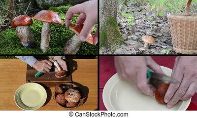 mushroom pick collage